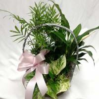 PF-300: Small Wonders Garden ($50.00)