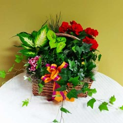 PF-308: Bountiful Blooming Basket ($150.00)