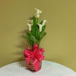 PF-314: Calla Lily Plant ($55.00)