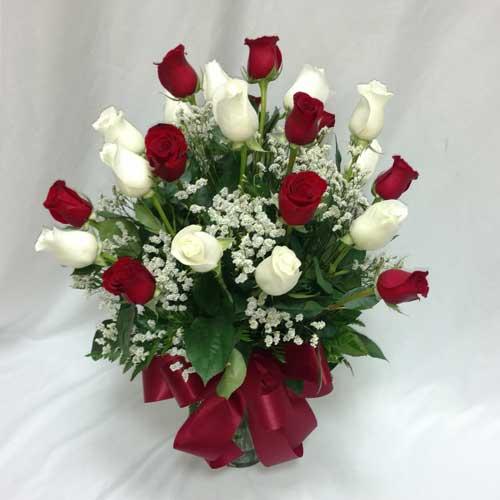 PF-800: Christmas Roses